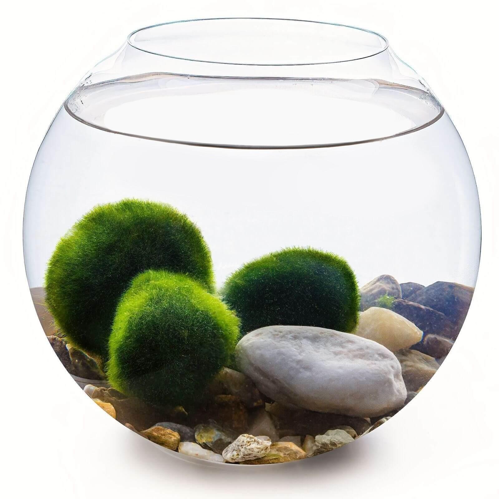 Set - kulaté akvárium 24 cm, 3 řasokoule, dekorace