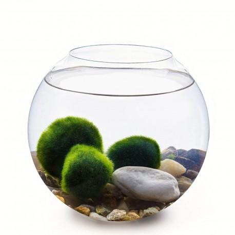Set - kulaté akvárium 20 cm, 3 řasokoule, dekorace