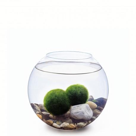 Skleněná koule a 2 řasokoule