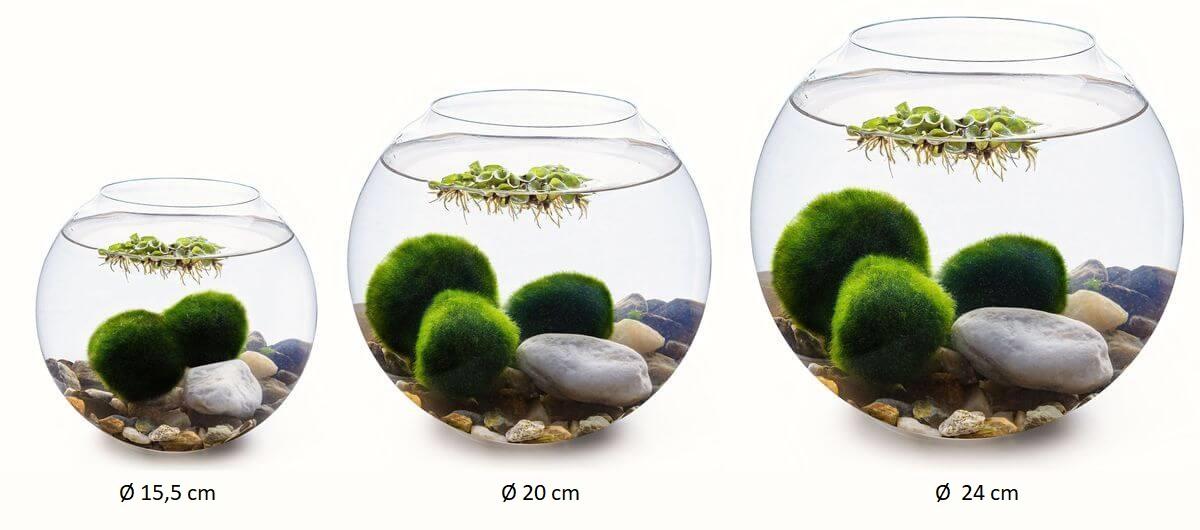 řasokoule akvárium panorama